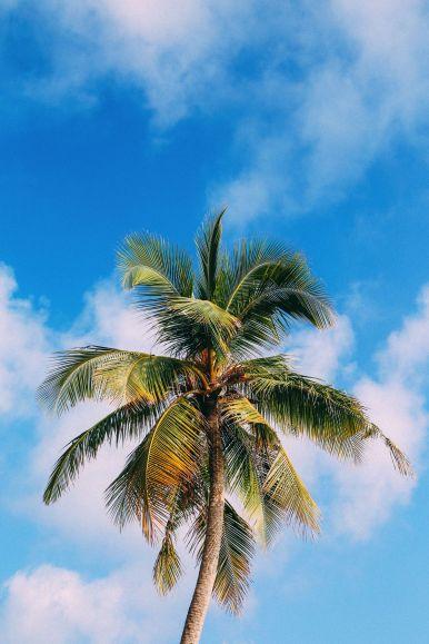 The Perfectly Lazy Day... In Kuramathi Island Maldives (49)