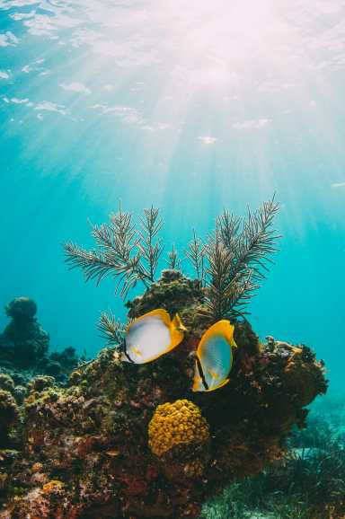 Best Things To Do In The Bahamas (19)
