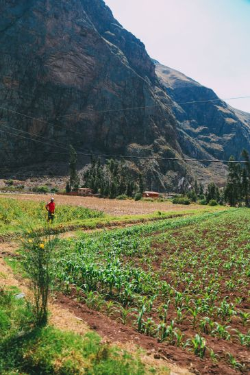 The Journey Up To Machu Picchu Village - Aguas Calientes, Peru (17)