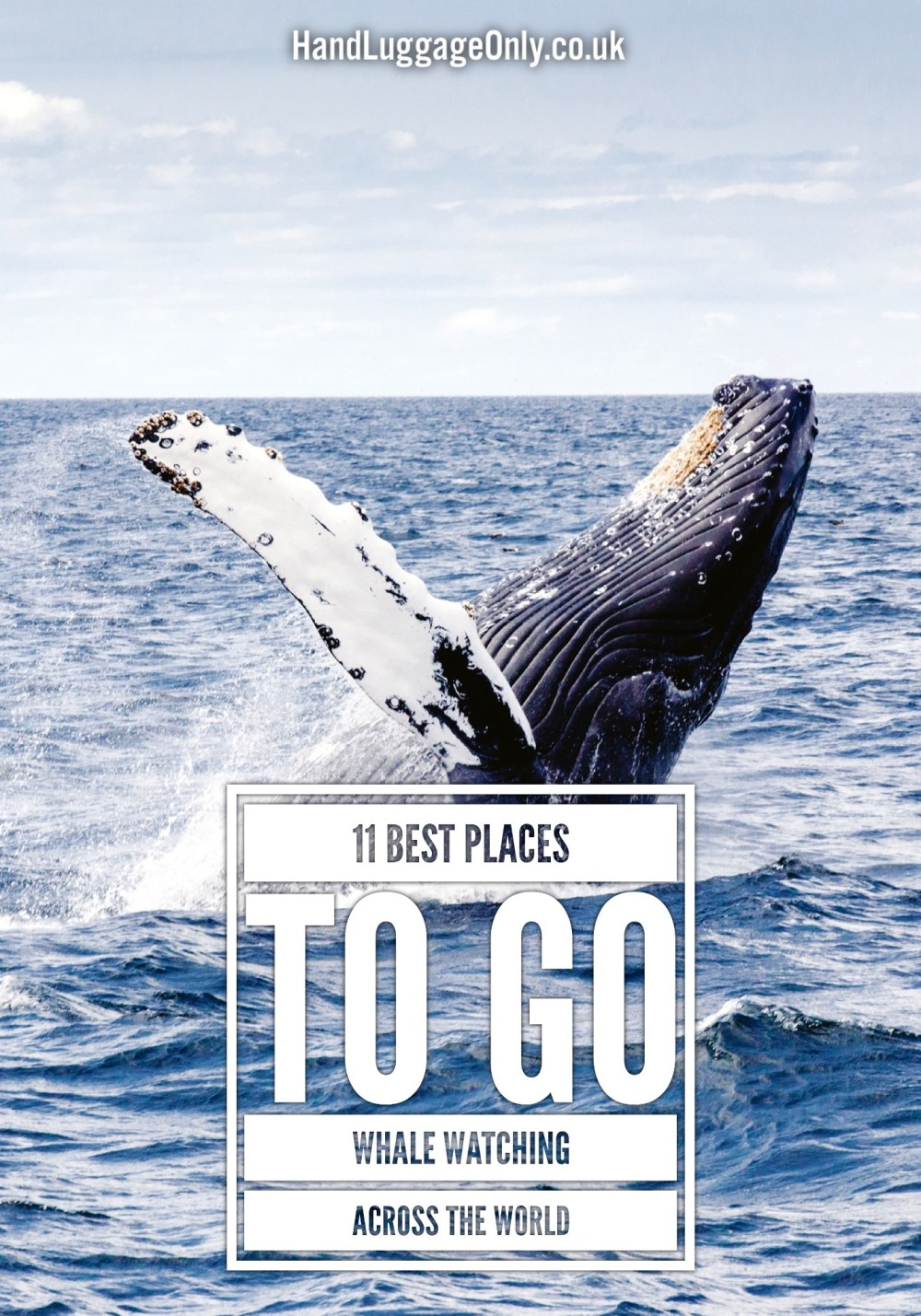 Best Places To Go Whale Watching Across The World (1)