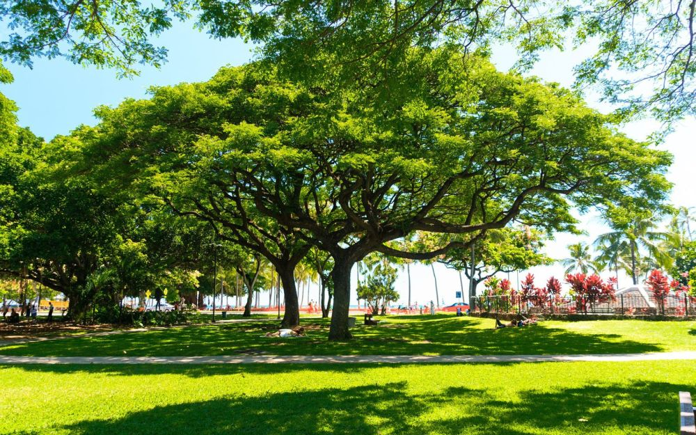Things To See And Do When Visiting Honolulu, Hawaii (4)