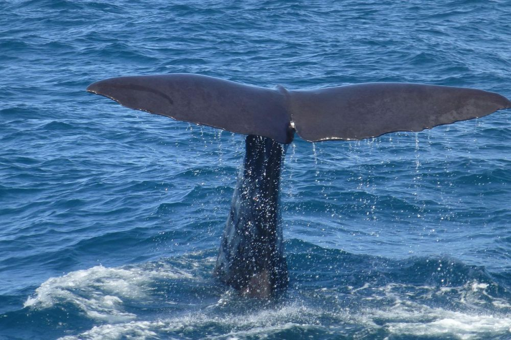 Best Places To Go Whale Watching Across The World (6)
