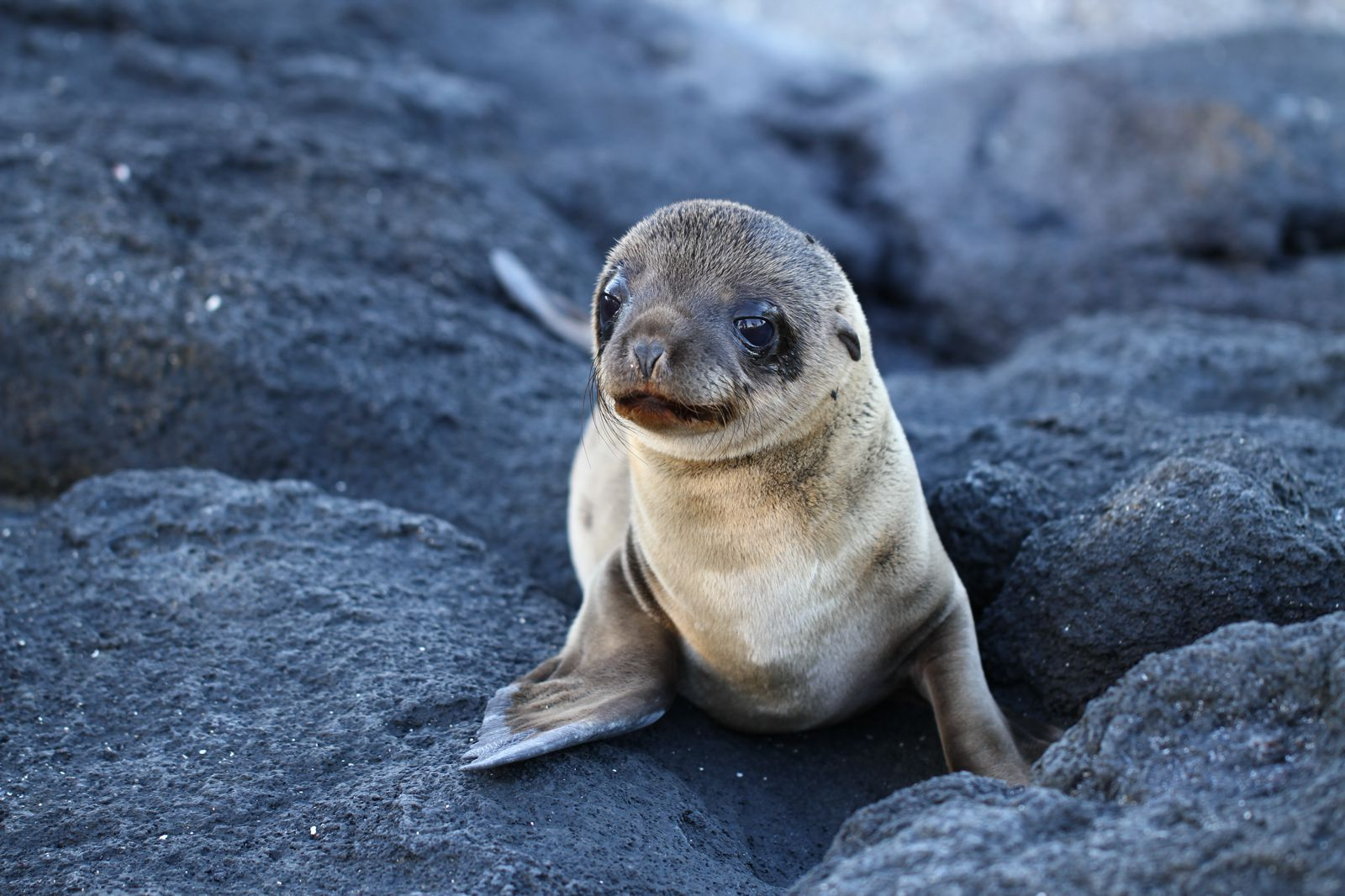 11 Amazing And Unique Animals You Have To See In The Galapagos Islands, Ecuador (6)