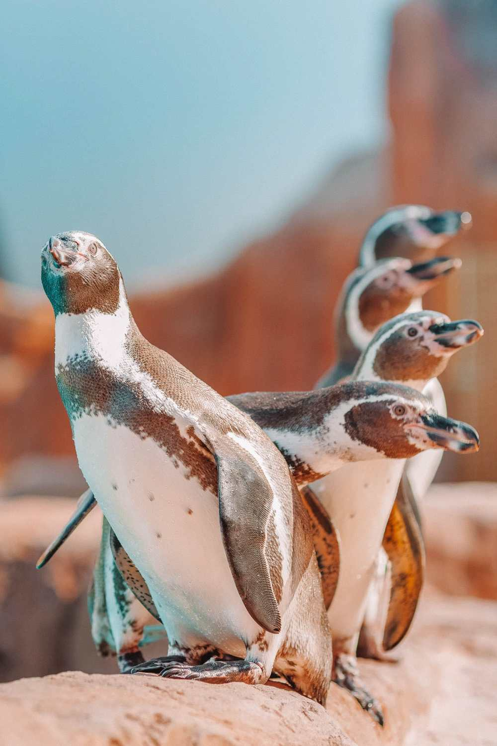 Animals To See In The Galapagos Islands (12)