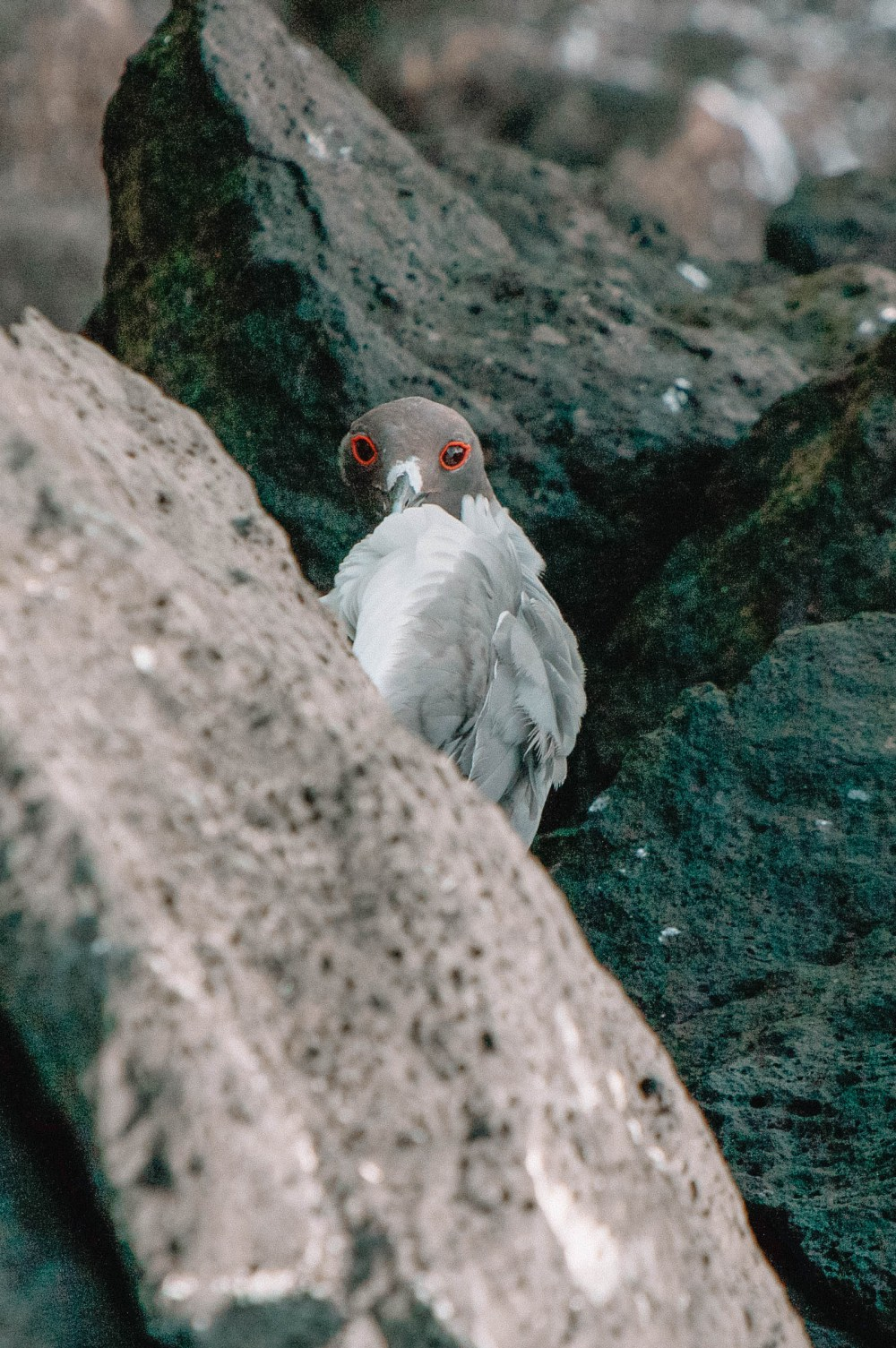 Animals To See In The Galapagos Islands (16)