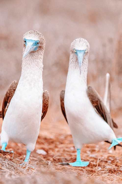 Animals To See In The Galapagos Islands (6)