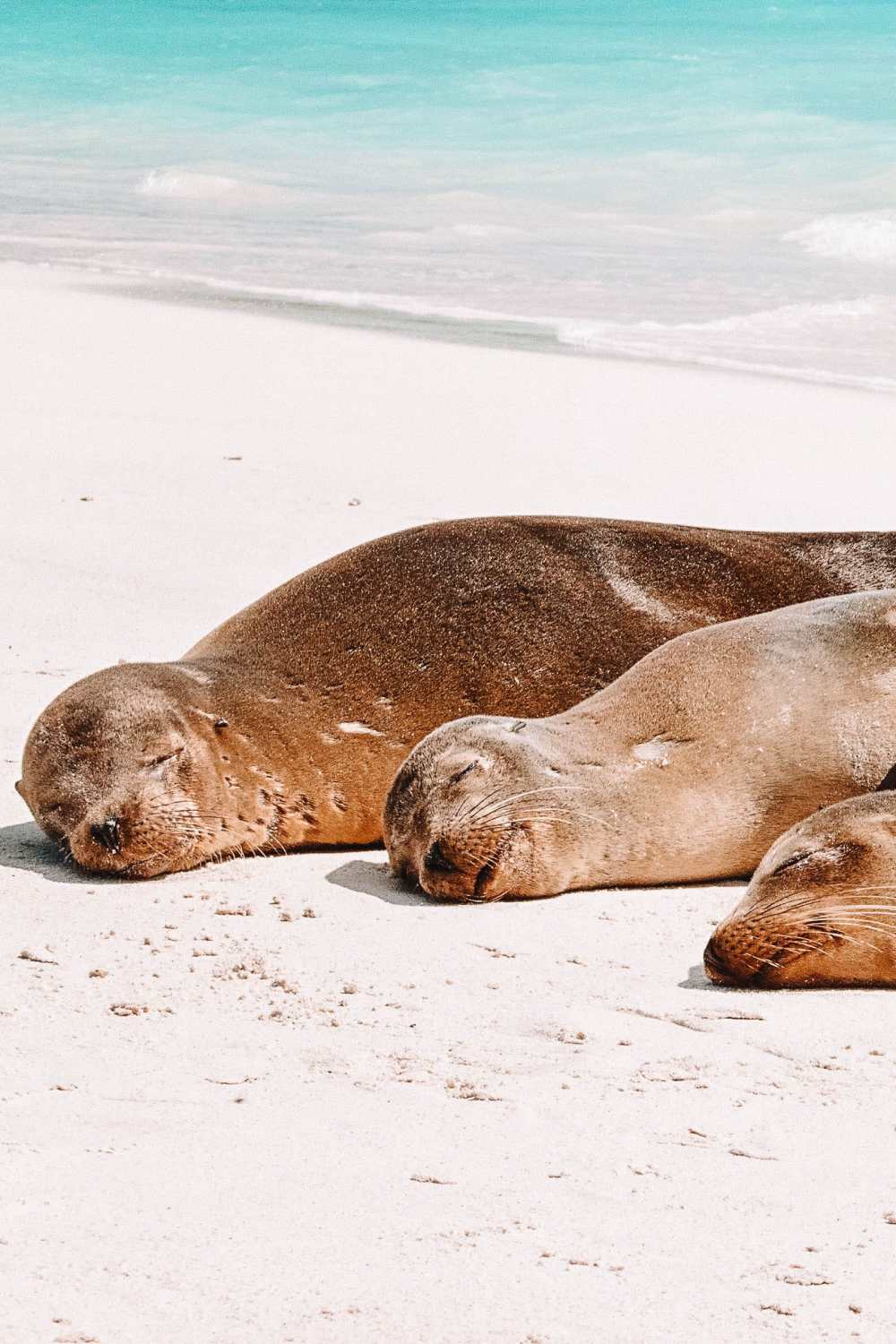 Animals To See In The Galapagos Islands (8)