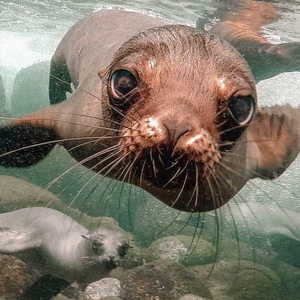 Animals To See In The Galapagos Islands (5)
