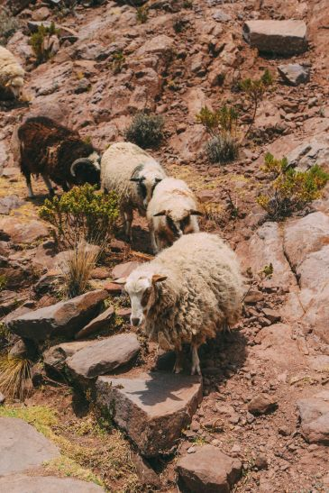 An Afternoon in Taquile Island, Peru (12)