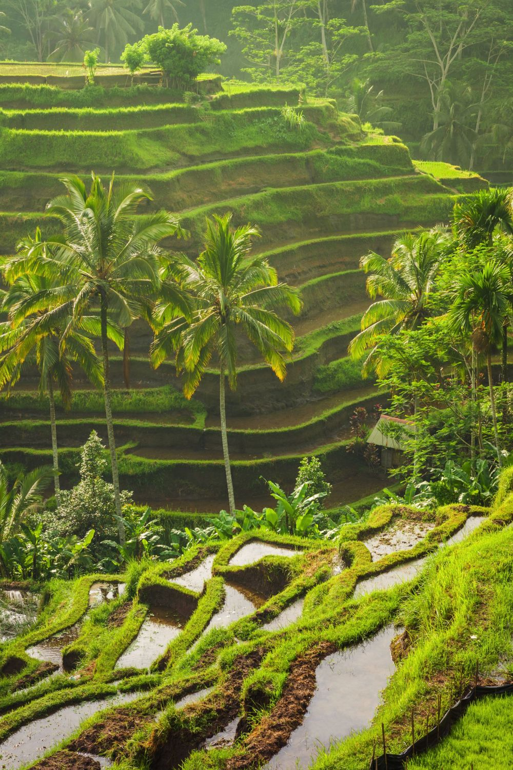 Complete Guide Of Things To See in Bali Guide (31)