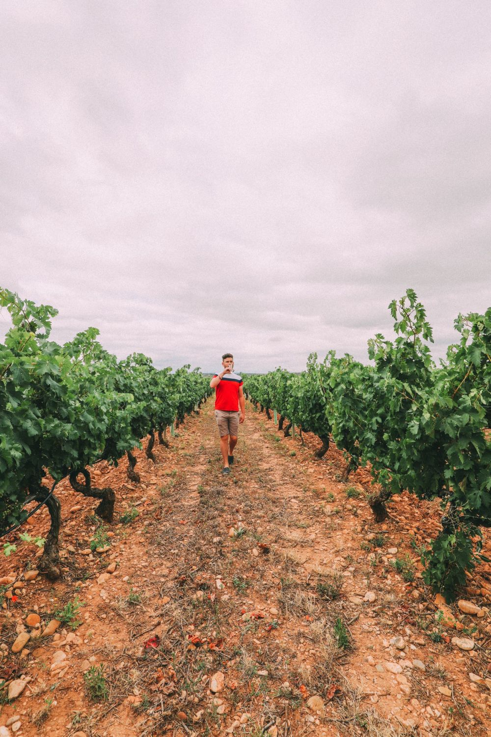 Afternoons In Spanish Vineyards In La Rioja... And Evening In Bilbao In The Spanish Basque Country (8)