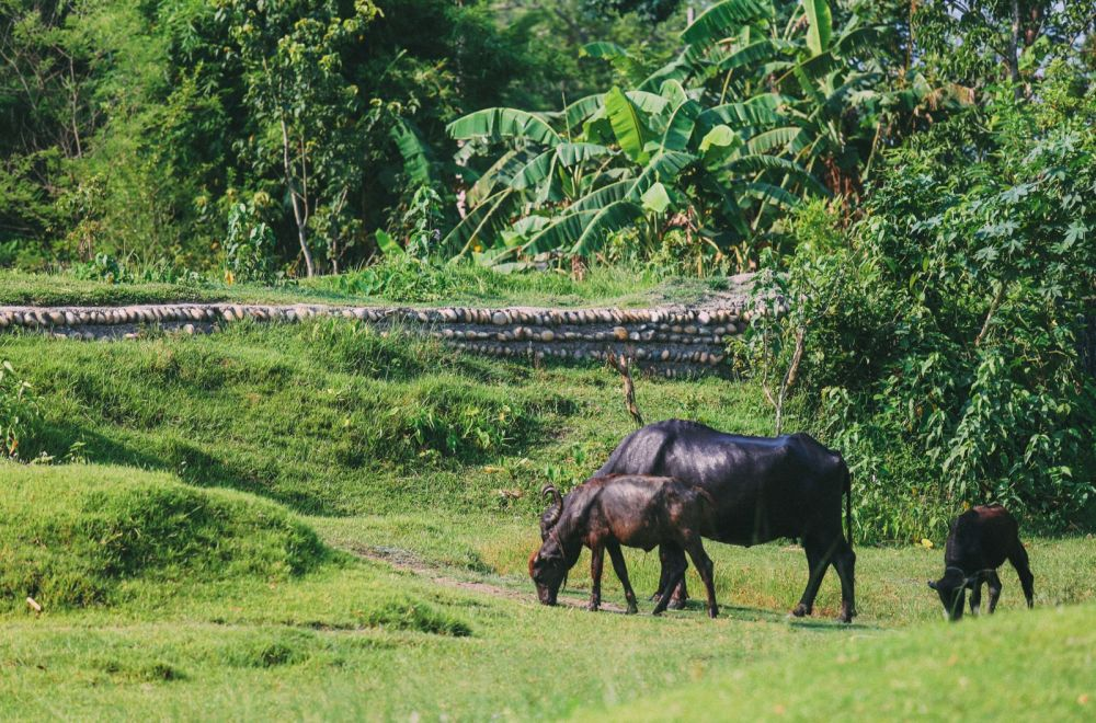 The Search For The One-Horned Rhino... In Chitwan, Nepal (20)