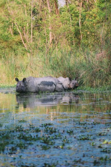 The Search For The One-Horned Rhino... In Chitwan, Nepal (30)