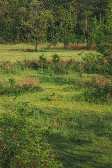 The Search For The One-Horned Rhino... In Chitwan, Nepal (42)