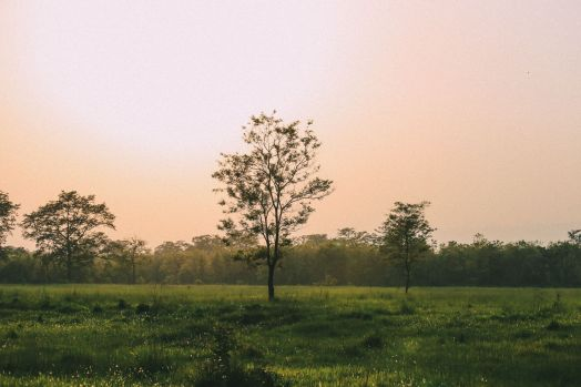 The Search For The One-Horned Rhino... In Chitwan, Nepal (49)