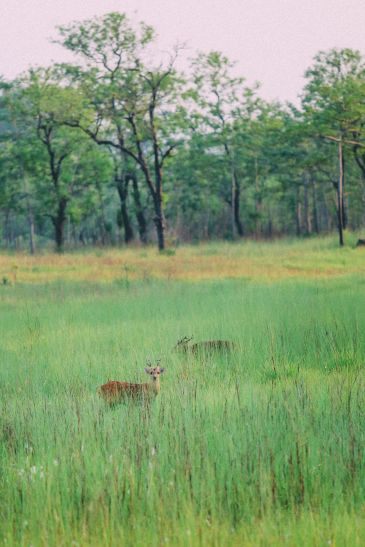 The Search For The One-Horned Rhino... In Chitwan, Nepal (51)