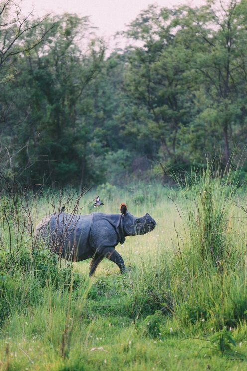The Search For The One-Horned Rhino... In Chitwan, Nepal (61)