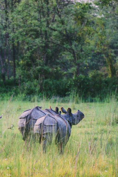 The Search For The One-Horned Rhino... In Chitwan, Nepal (62)