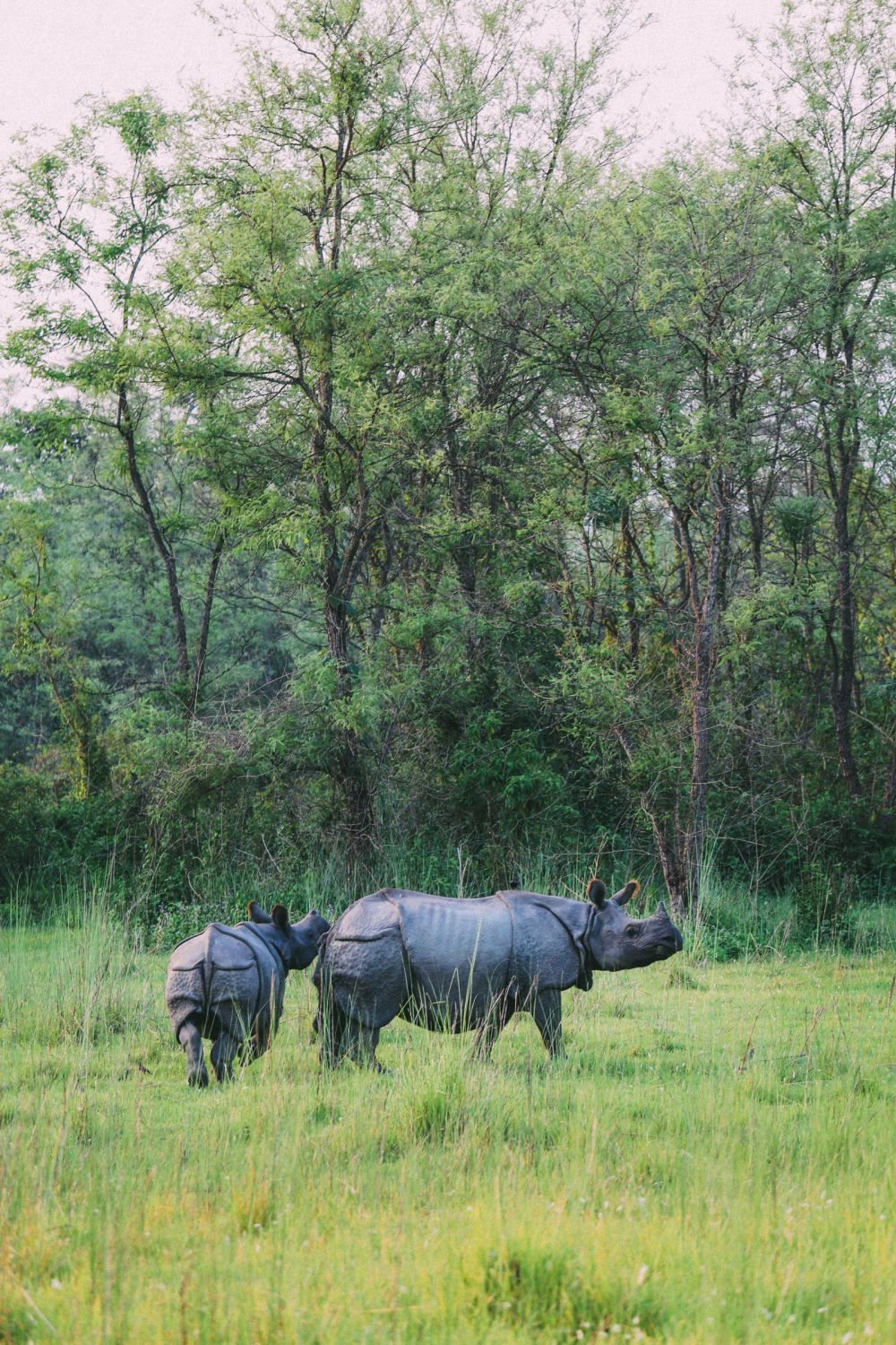 The Search For The One-Horned Rhino... In Chitwan, Nepal (63)