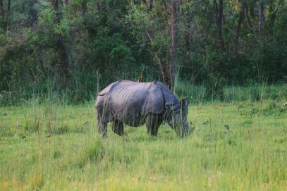 The Search For The One-Horned Rhino... In Chitwan, Nepal (65)