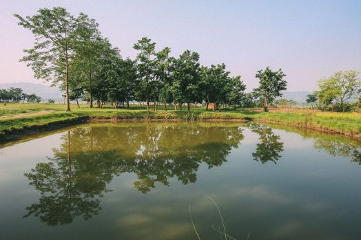 The Sights, Sounds And People Of Chitwan, Nepal (21)