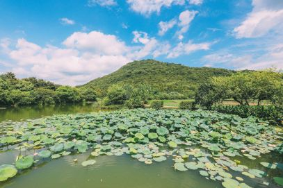 These Are The Many Reasons Why You Need To Visit Hangzhou, China (14)