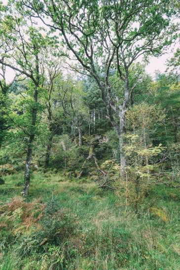 Whisky Drinking, Loch Rowing And Picnicking In The Scottish Highlands (59)