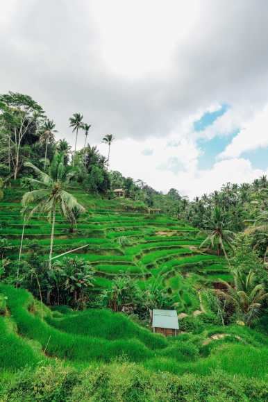 15 Things You Need To Know About Visiting Bali (26)