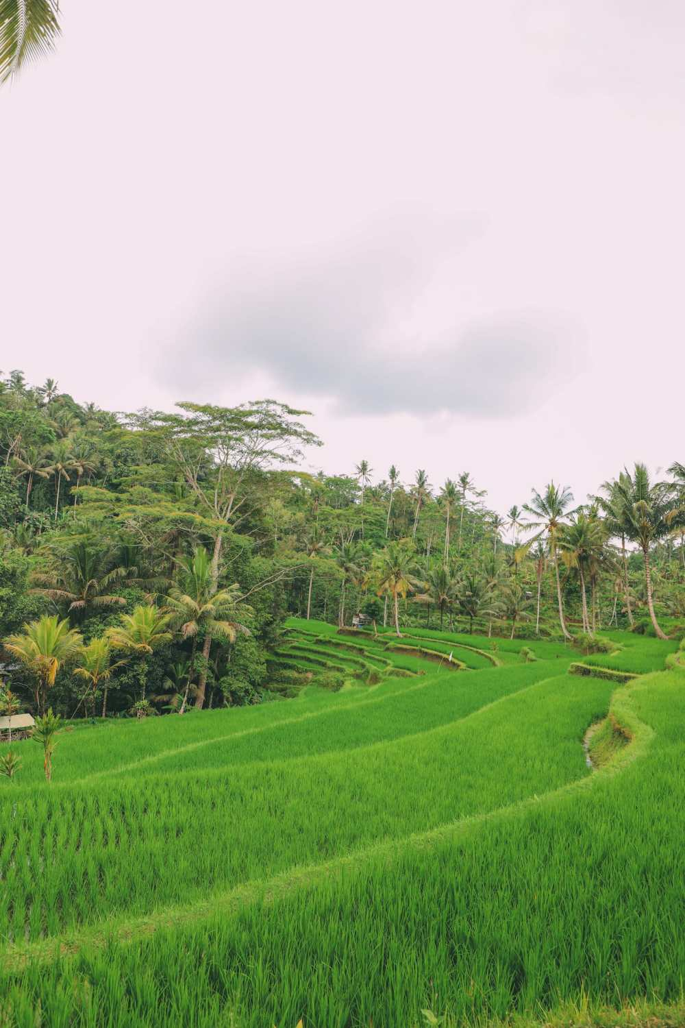 15 Things You Need To Know About Visiting Bali (17)
