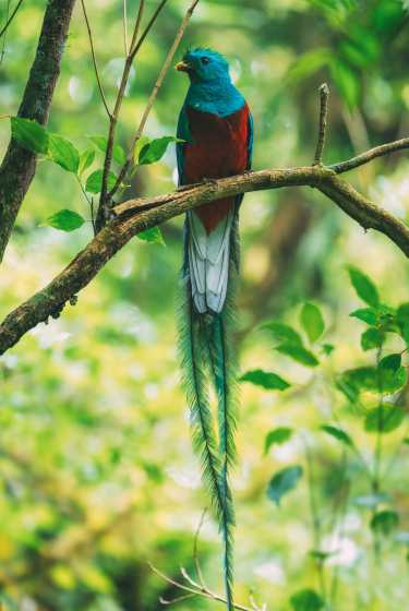 10 Amazing Things To Do In Costa Rica (5)
