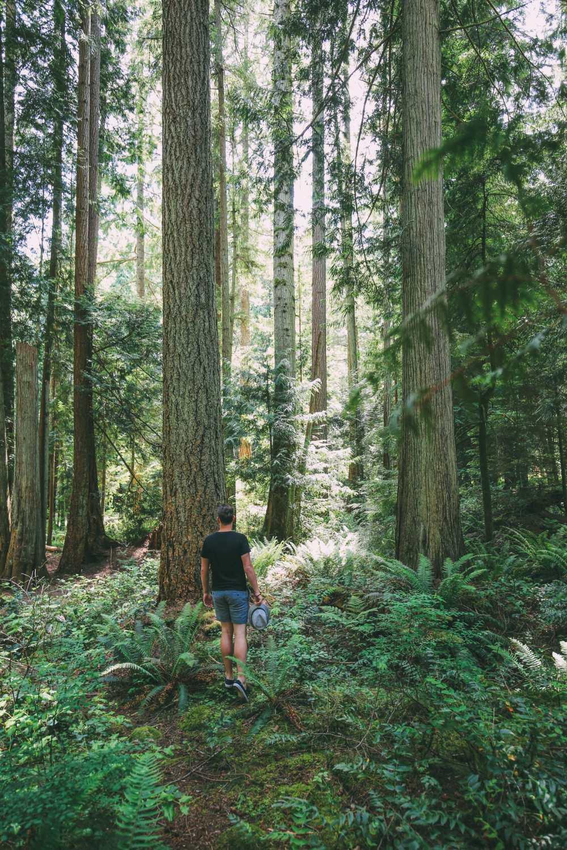 Driving The Sunshine Coast Of British Columbia Canada (26)