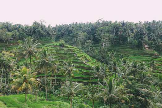 Bali Travel - Tegalalang Rice Terrace In Ubud And Gunung Kawi Temple (1)