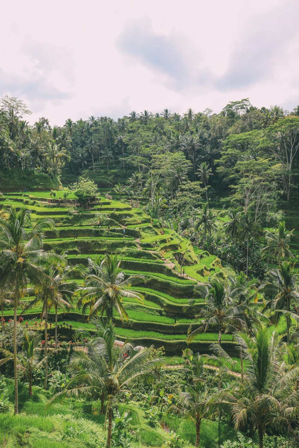 Bali Travel - Tegalalang Rice Terrace In Ubud And Gunung Kawi Temple (3)