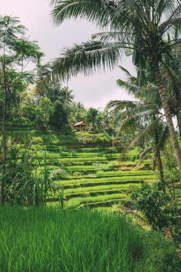 Bali Travel - Tegalalang Rice Terrace In Ubud And Gunung Kawi Temple (5)