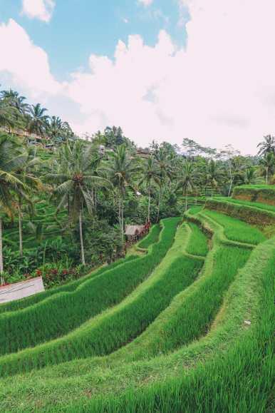 Bali Travel - Tegalalang Rice Terrace In Ubud And Gunung Kawi Temple (7)