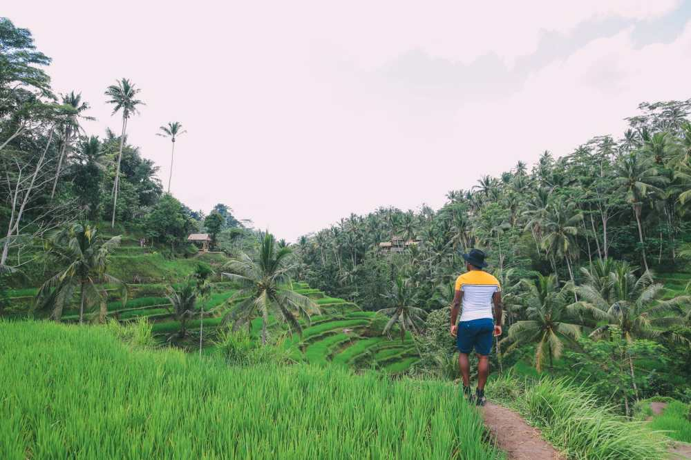 Bali Travel - Tegalalang Rice Terrace In Ubud And Gunung Kawi Temple (10)