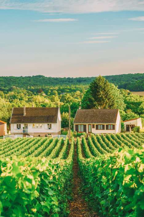 9 Beautiful Wine Regions In France You Need To Holiday In (6)