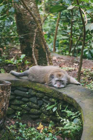 Ubud Monkey Forest In Bali - Things To Know Before You Visit (6)