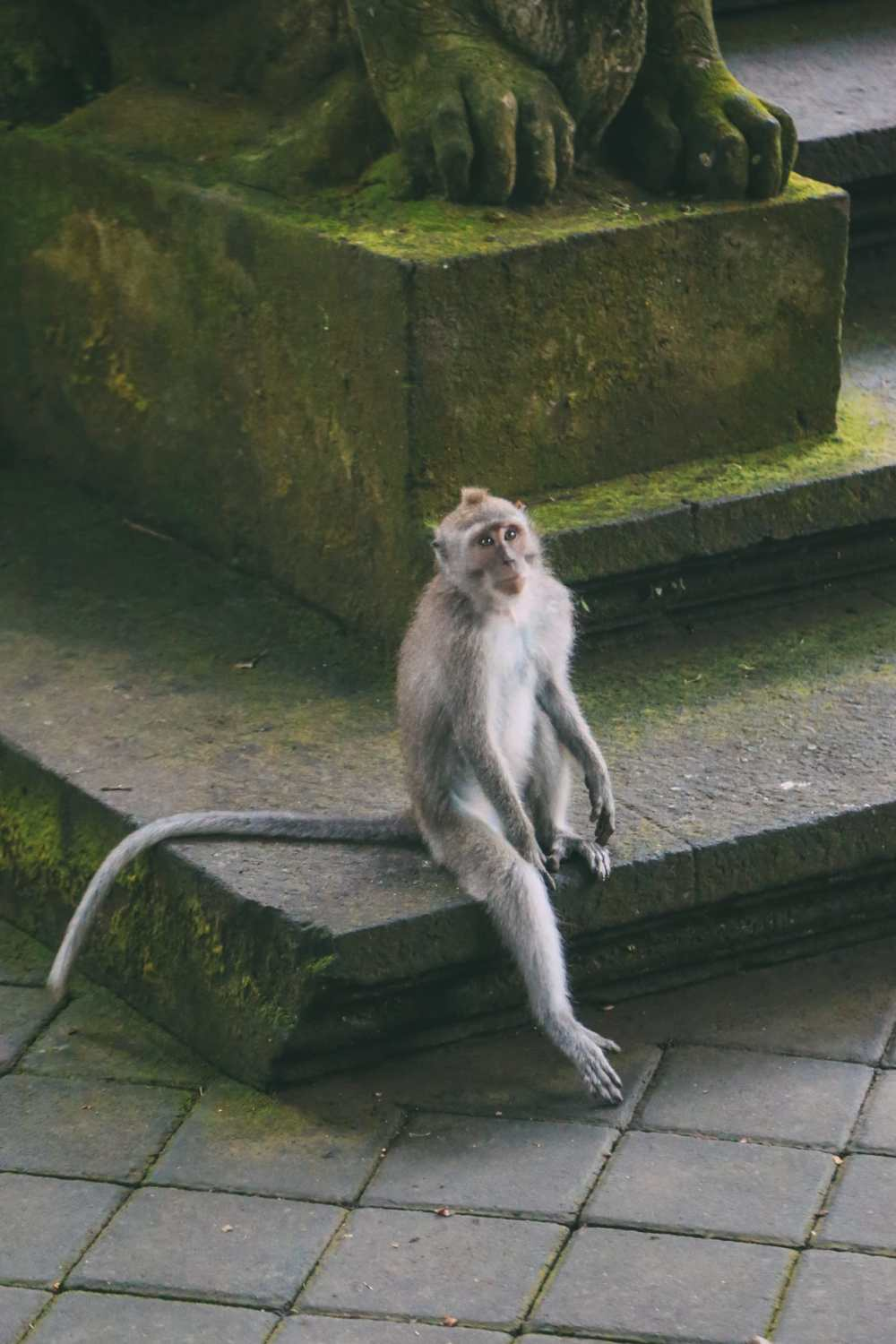 Ubud Monkey Forest In Bali - Things To Know Before You Visit (8)