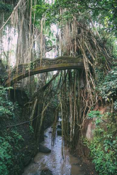 Ubud Monkey Forest In Bali - Things To Know Before You Visit (18)