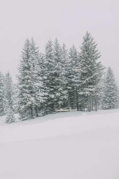 how to go from interlaken to jungfraujoch