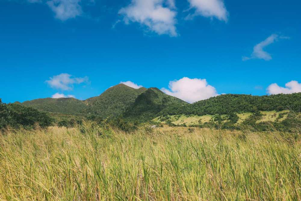 Tropical Adventures In The Island Of St Kitts... (46)