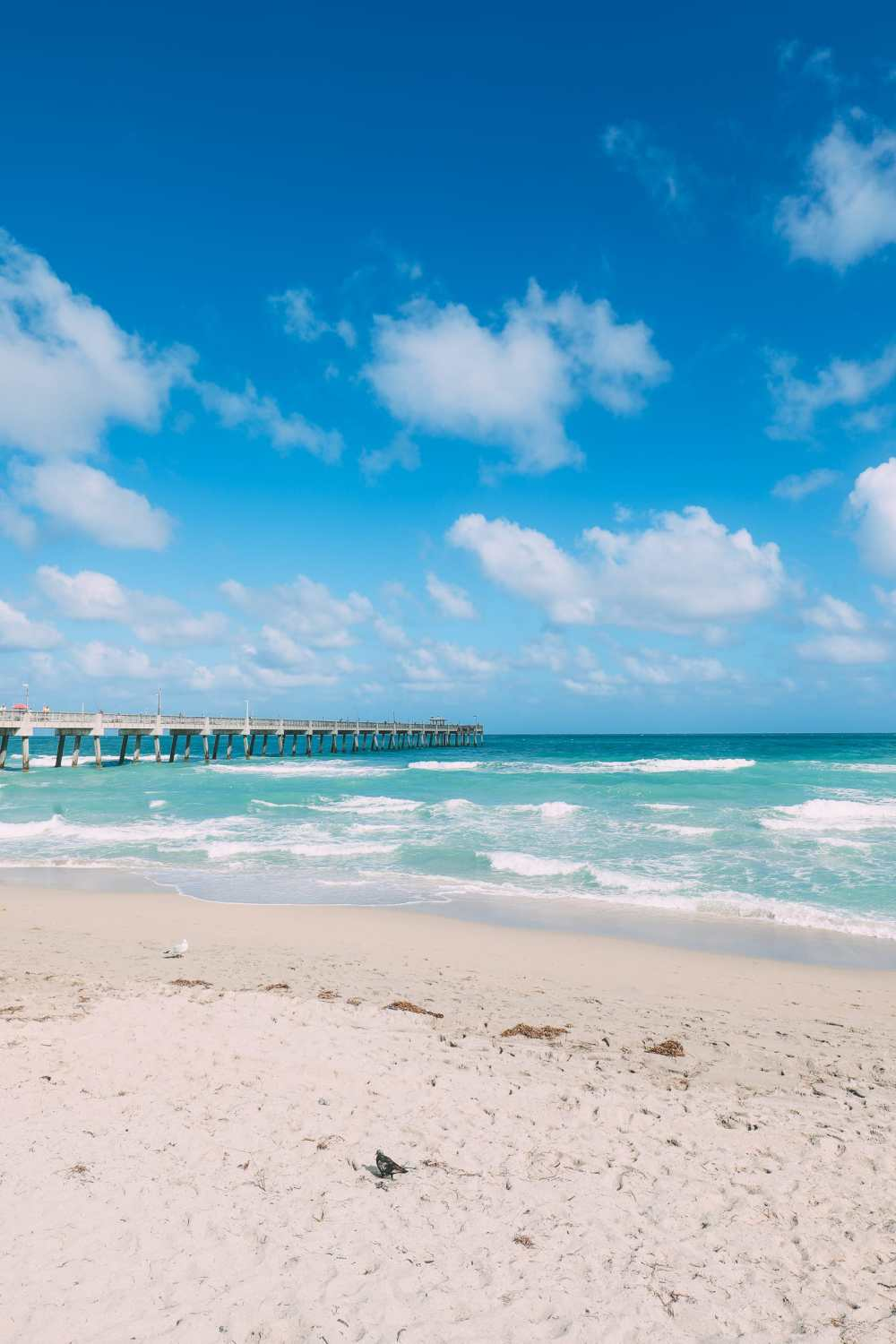 Sunny Days... In Fort Lauderdale, Florida (10)
