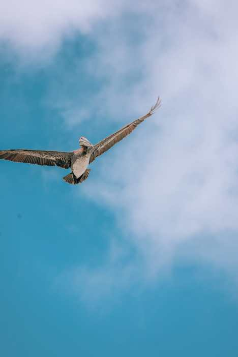 Down At The Beach House... In St Kitts, The Caribbean (3)
