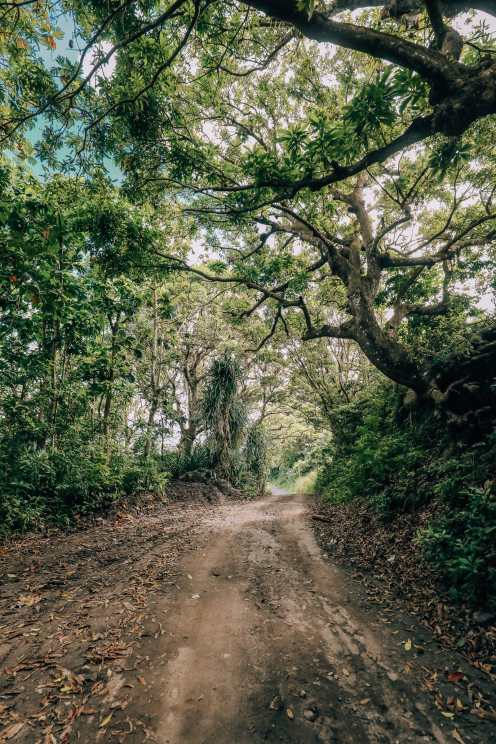 Down At The Beach House... In St Kitts, The Caribbean (27)