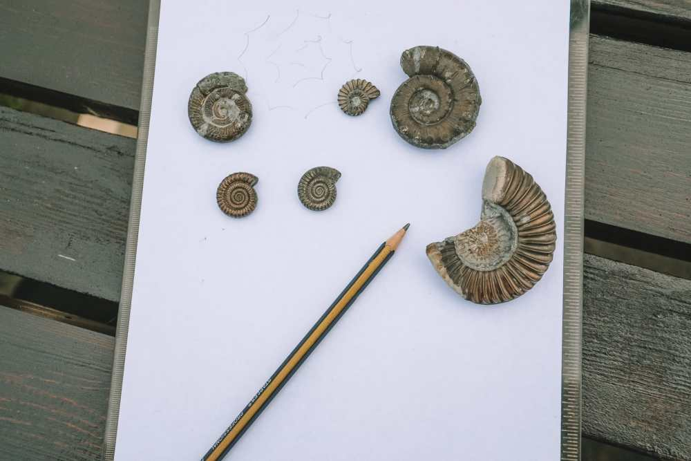 Searching For Dinosaurs And Fossils On The Jurassic Coast Of England (3)