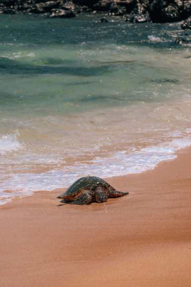 Best Things To Do In Maui (20)