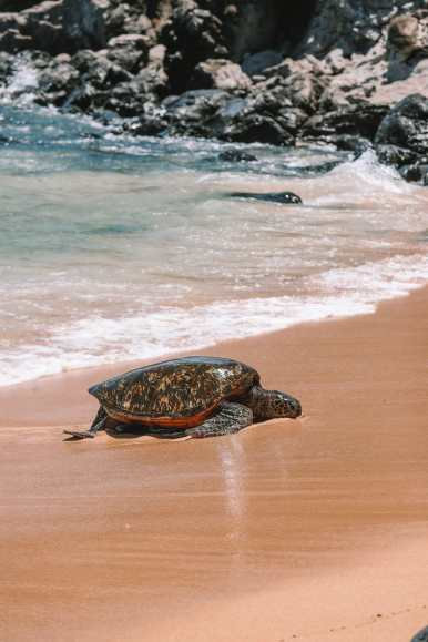 Best Things To Do In Maui (17)