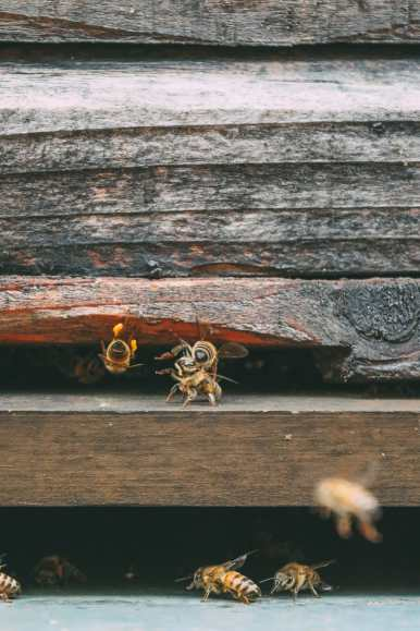How To Be A Bee-Keeper For A Day In England (14)
