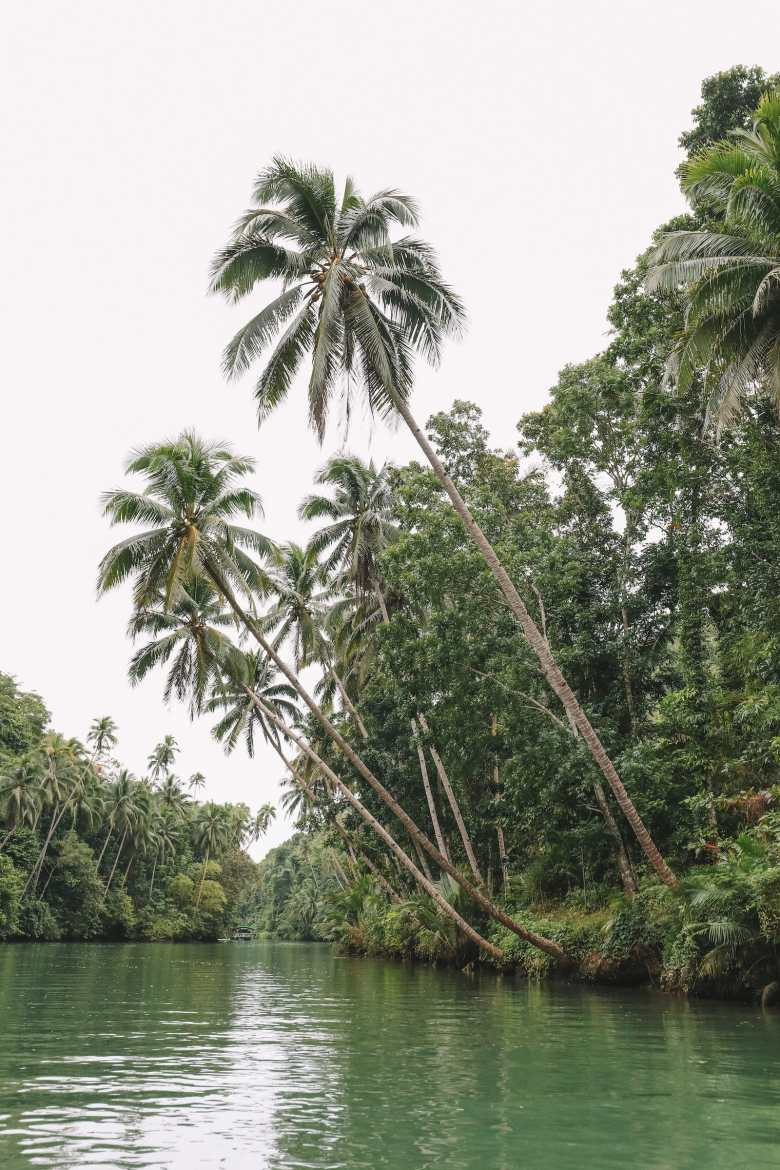 Photos And Postcards From Bohol In The Philippines (15)
